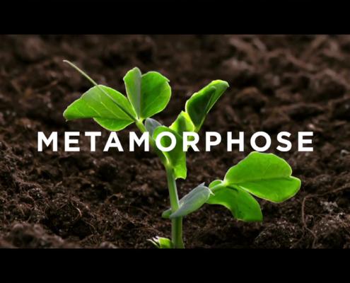 metamorphose